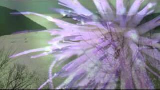 伊藤久男 - あざみの歌