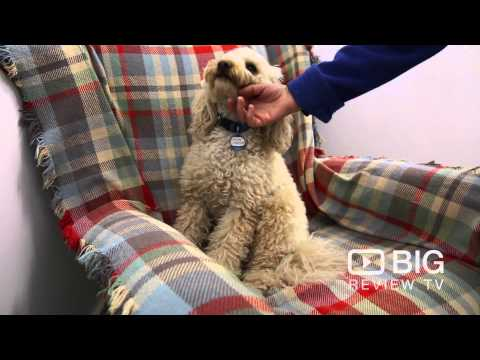 Lilly's Doggy Day Care in Edwardstown SA offering Dog Training and Grooming