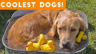 Download Dog Days of Summer Coolest Dogs of 2018 | Funny Pet Videos Mp3 and Videos