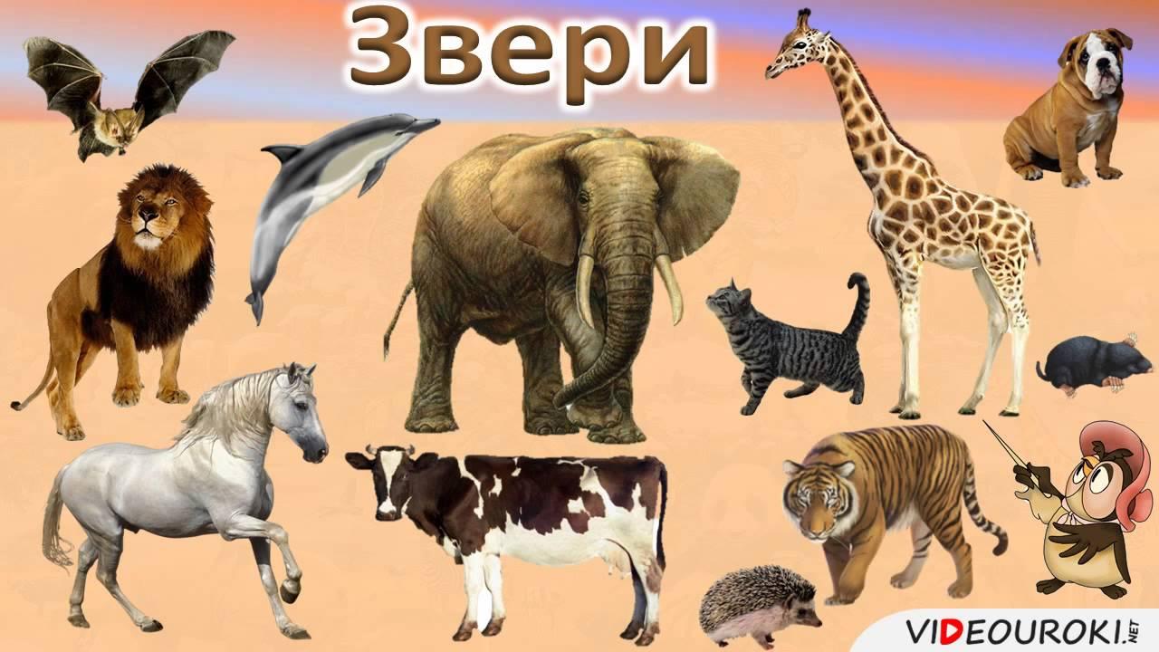 Фрагменты уроков на тему домашние животные в 3 классе коррекционной школы