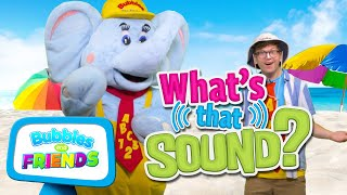 Learn about Animals at the Beach   What's That Sound?   Educational Videos for Kids