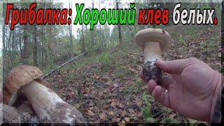 Быстрая река грибные берега Рыбалка на спиннинг и сбор грибов осенью в сентябре