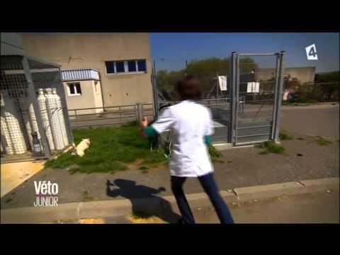 Véto junior France: Episode 1
