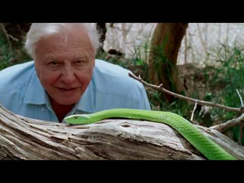 David Attenborough: A Life on Our Planet trailers