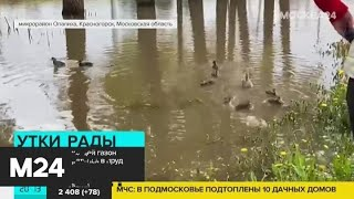 Фото Из-за сильных дождей газон в Опалихе превратился в пруд - Москва 24