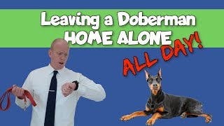 Owning a Doberman and Working Full Time