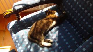 Sleeping cat Ireland 2013