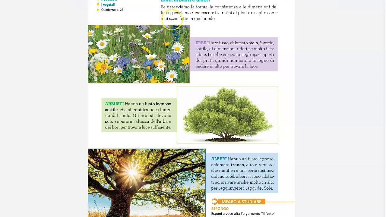 Immagini Di Piante E Alberi erbe, arbusti e alberi - youtube