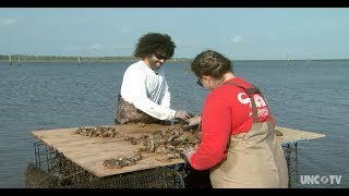 How to operate an oyster farm in North Carolina/UNC-TV Science