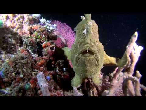 Diving North Sulawesi