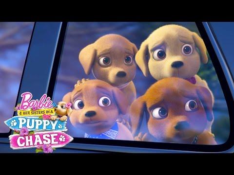Meet Stacies Puppy Rookie