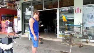 Видео  Испуг попугая