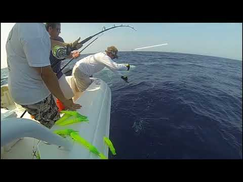 Offshore Fishing Tip #34: When Leadering a Pelagic