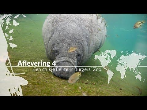 Project Mangrove: Een stukje Belize in Burgers' Zoo Aflevering 4