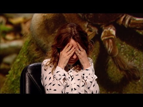 Birdeating spiders  QI: Series M Episode 10 P  BBC Two