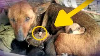 Мужчина взглянул на собаку и ее шесть щенят и вдруг увидел торчащую ручку…mosshow