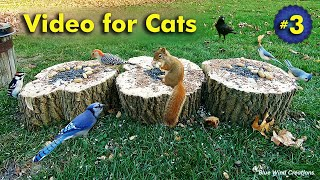 TV for Cats  Birds and Squirrels for Cats to Enjoy!