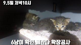 9.5일 순양이확인/6아깽이상태/베란다 확장공사