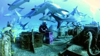 Nassau Bahamas Shark Dive