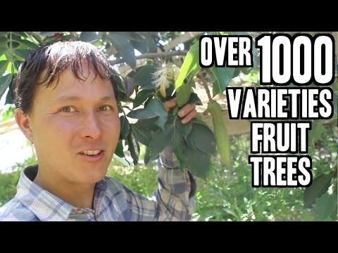 Rare Fruit Tree Nursery in California sells over 1000 Variet