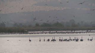 מלכודת מוות: המכשול שגורם לאלפי ציפורים למות