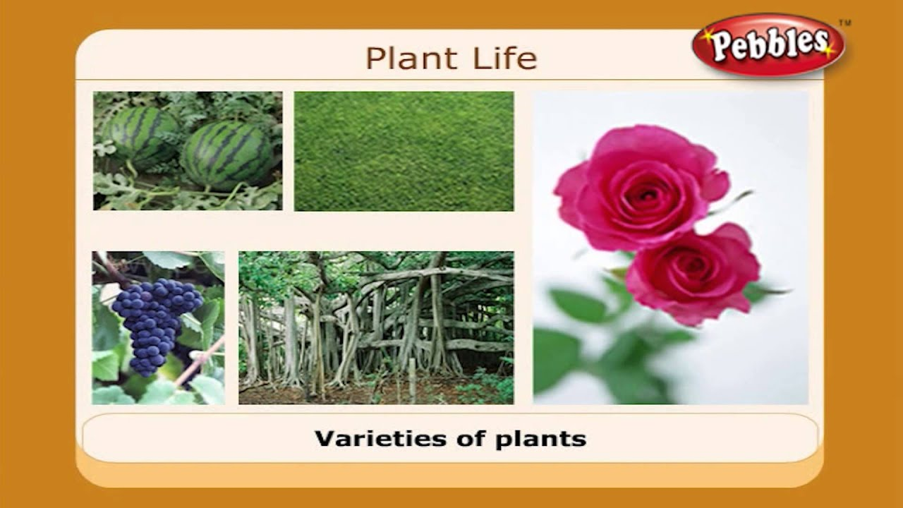 Plant Life | Science Basics For Children | Science Projects for Kids ...