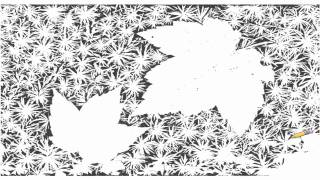 Auto Draw 2: Autumn Leaves On Forest Floor, Vermont