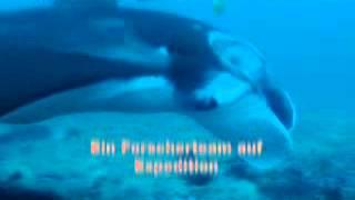 Expeditionen ins Tierreich: Abenteuer Ozean