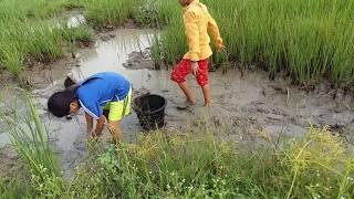 Amazing fishing at Battambang - people fishing in Cambodia - How to Catches fish (Part 96)