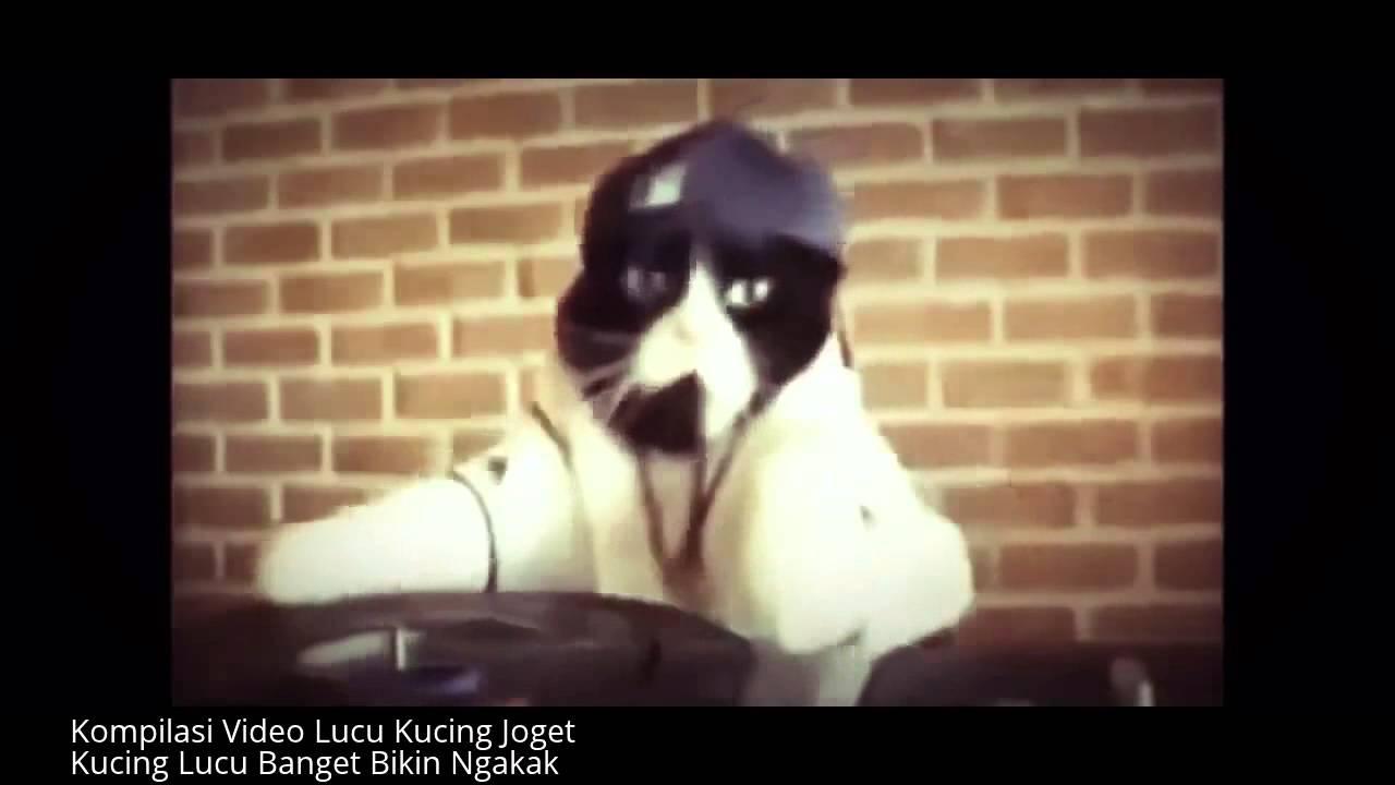 Video Lucu Anjing Dan Kucing Berjoget Bersama YouTube
