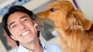 Видео признание в любви братьям нашим меньшим.Собака - больше, чем друг! Наши любимые животные