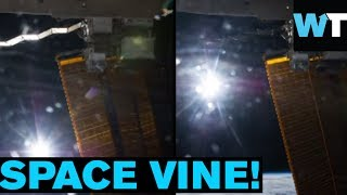 One Small Step for Vine, One Giant Leap for Vine-Kind | What's Trending Now