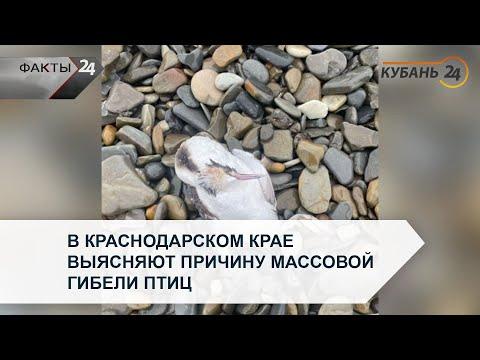 В Краснодарском крае выясняют причину массовой гибели птиц