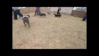 Small Dog/puppy Socialization Class - 02/28/2015 - Utah Dog Trainer