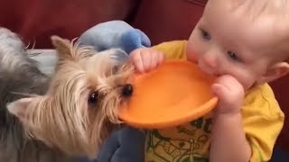 Adorable Babies playing with baby animals – funniest and cutest moments compilation