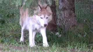 2020-08-26 puppies 6 weeks old