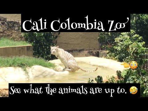 Zoologico de Cali (Zoo in Cali Colombia pt2)