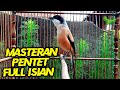 Suara Cendet Full Isian Cocok Buat Masteran Cendet Bakalan Atau Muda Hutan  Mp3 - Mp4 Download