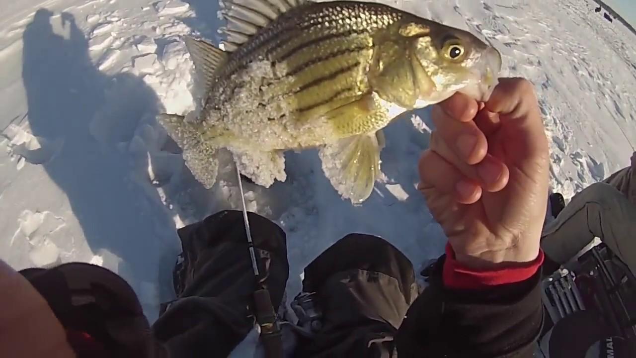 Ice fishing yellow bass youtube for Ice fishing iowa