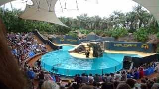 Merileijonia - Sea Lion Show, Loro Parque, Tenerife
