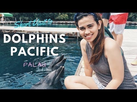 PALAU DOLPHINS PACIFIC | Travel Palau | Dyana Ishida