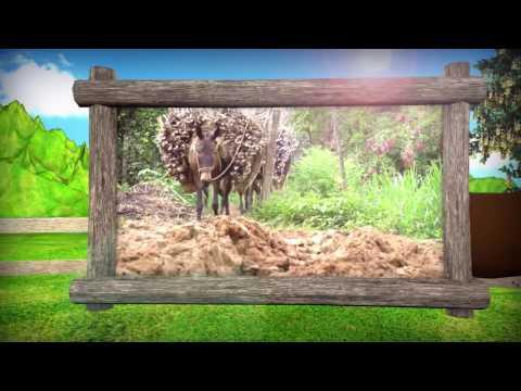 Plantaciones de Sábila - Captulo 2