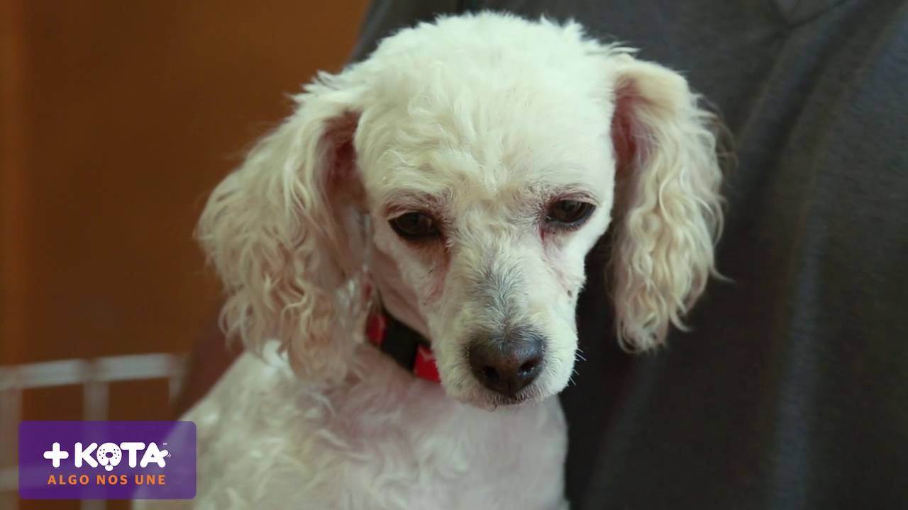 +KOTA - Perros pequeños en adopción: Muñeca