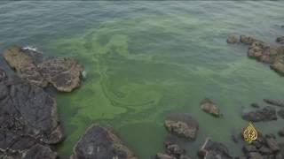 هذا الصباح- الطحالب تغير زرقة البحر للون الأخضر