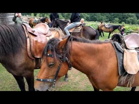 Horseback ride in the Carpathian mountains (Ukraine). My experiance