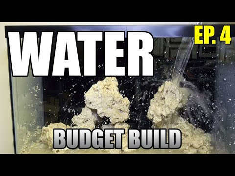 Filling Your Tank With Saltwater For The First Time - Budget Build