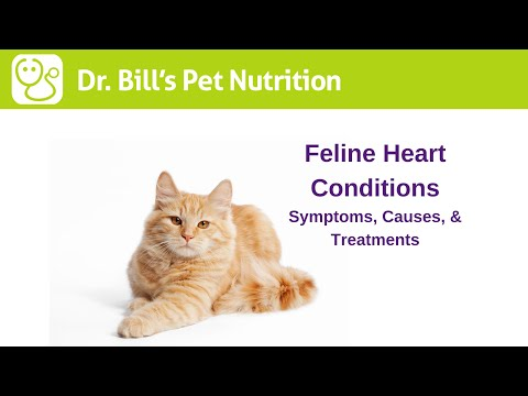 pet conditions