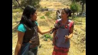 CORTV en el huerto de San Miguel del Valle, Tlacolula, Oax.