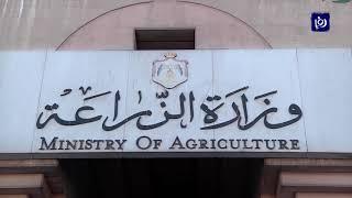 """""""الزراعة"""": القضاء على أول أسراب الجراد والإعداد لمكافحة سرب أكبر (5-5-2019)"""