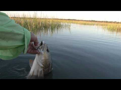 Redfish at Low Tide to High Tide by Captain Troy